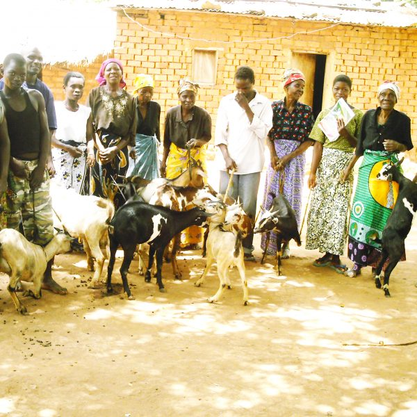 Goats for Widows
